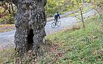 BB_20181021_0227 / Quercus robur / Sommereik