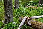 KA_100607_3723 / Fomitopsis pinicola / Rødrandkjuke