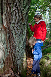KA_110925_3726 / Quercus robur / Sommereik