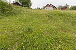 KA_140706_6080 / Gymnadenia conopsea / Brudespore