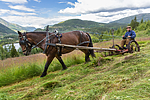 KA_150730_187 / Equus caballus / Hest