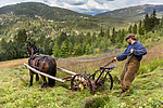 KA_150730_252 / Equus caballus / Hest