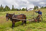 KA_150730_263 / Equus caballus / Hest