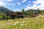 KA_150730_286 / Equus caballus / Hest