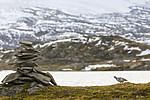 KA_170924_214 / Lagopus muta / Fjellrype
