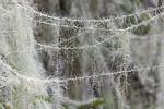 KA_190923_166 / Usnea longissima / Huldrestry