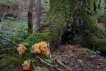 SIG_4889 / Ramaria brunneicontusa / Gullkorallsopp