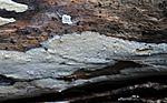 SIR_3268 / Mycoacia aurea / Gullvokspigg