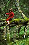 bb009 / Pinus sylvestris / Furu