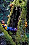 bb090 / Laetiporus sulphureus / Svovelkjuke <br /> Quercus robur / Sommereik