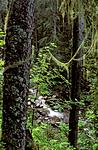 bb182 / Picea abies / Gran <br /> Usnea longissima / Huldrestry