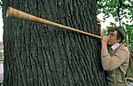 bb798 / Quercus robur / Sommereik