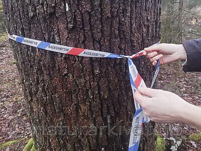 IMG_20201205_125503 / Quercus robur / Sommereik