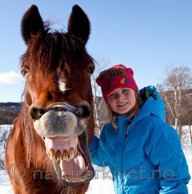 KA_110305_1118-2 / Equus caballus / Hest