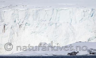 KA_140614_4645 / Ursus maritimus / Isbjørn