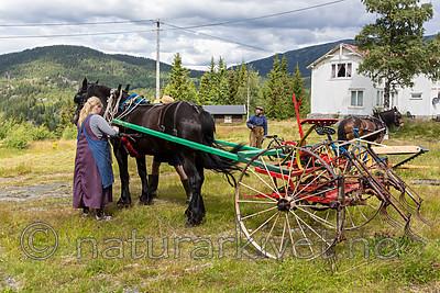 KA_150730_104 / Equus caballus / Hest