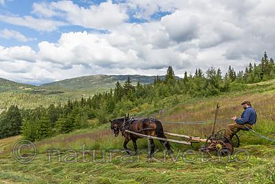 KA_150730_272 / Equus caballus / Hest