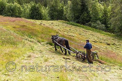 KA_150730_290 / Equus caballus / Hest