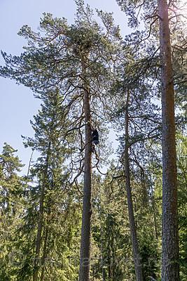 KA_180608_35 / Haliaeetus albicilla / Havørn