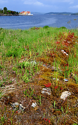 SIR_0610 / Cladonia subrangiformis / Kystgaffel